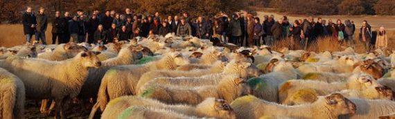 100 herders op Landelijke Herdersdag 2016 Loonse en Drunense Duinen