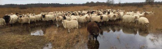 Landelijke Herdersdag vr 10 november 2017 in Exloo